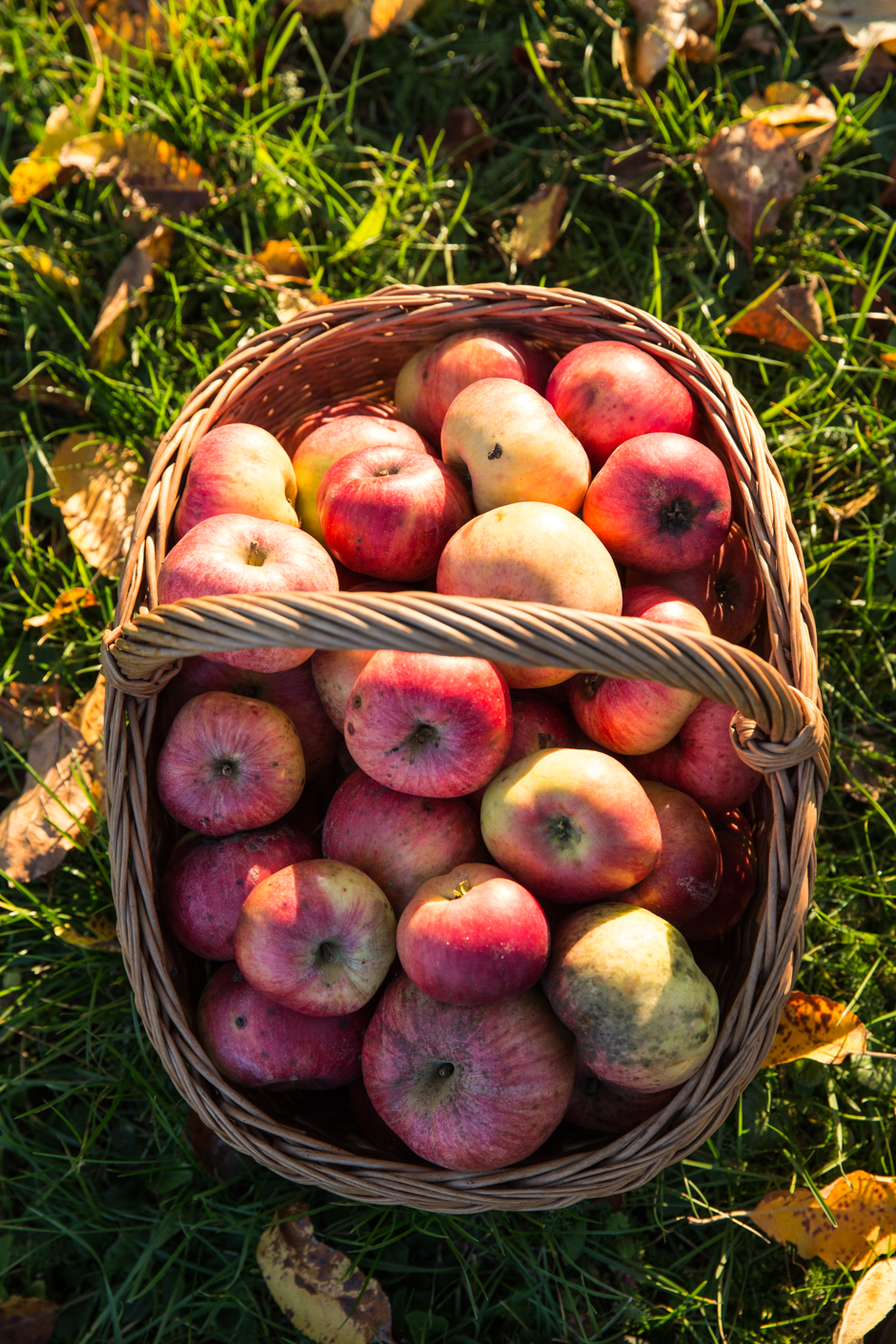apples_from_our_own_garden