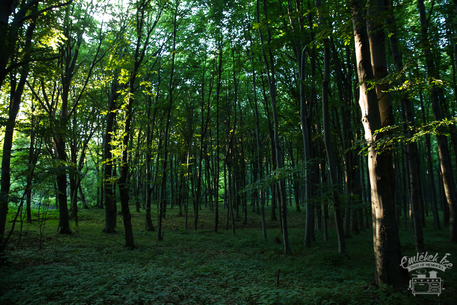 forest in the Hungarian countryside